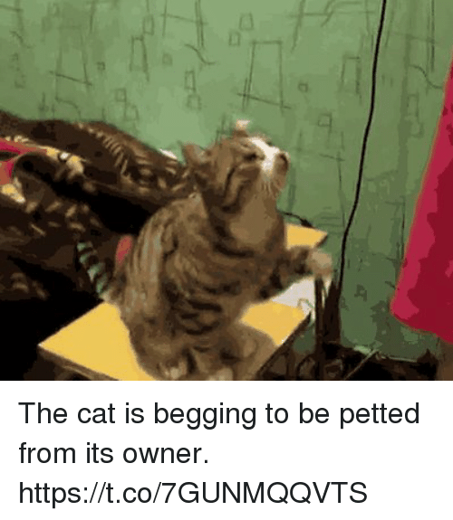 Cats Begging To Be Petted
