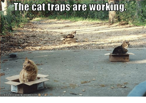 Image result for cat traps