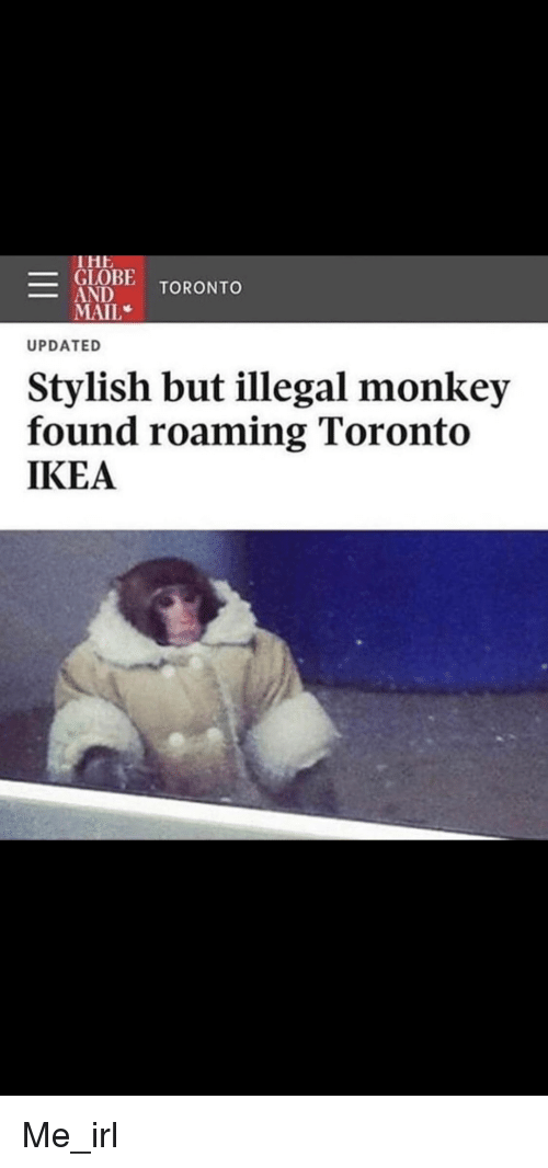 Ikea, Mail, and Monkey: THE  _CİOBE TORONTO  MAIL  UPDATED  Stylish but illegal monkey  found roaming Toronto  IKEA