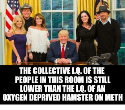 Oxygen, Meth, and Still: THE COLLECTIVELQ.OFTHE  PEOPLE IN THIS ROOMIS STILL  LOWER THAN THELQ. OFAN  OXYGEN DEPRIVED HAMSTERON METH