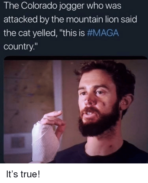 The Colorado Jogger Who Was Attacked by the Mountain Lion Said the