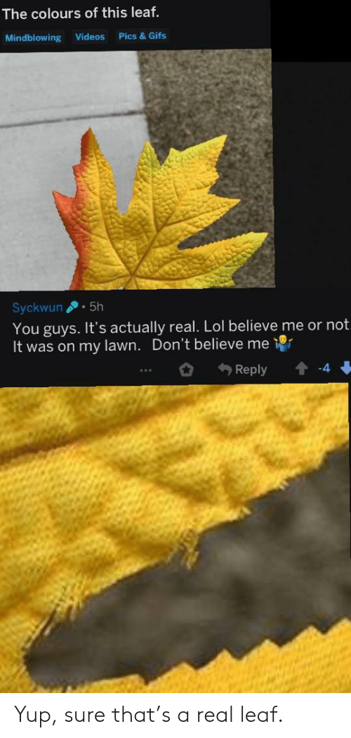 Lol, Videos, and Gifs: The colours of this leaf.  Mindblowing Videos Pics & Gifs  Syckwun5h  You guys. It's actually real. Lol believe me or not  It was on my lawn. Don't believe me  Reply -4  23 Yup, sure that's a real leaf.