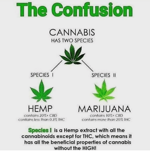 Memes, Marijuana, and Beneficial: The Confusion  CANNABIS  HAS TWO SPECIES  SPECIES  SPECIES II  HEMP  MARIJUANA  contains 20 CBL  contains less than 0.3% IHC  contains 10%, CBD  contains more than 20% IHC  Species I is a Hemp extract with all the  cannabinoids except for THC, which means it  has all the beneficial properties of cannabis  without the HIGH!