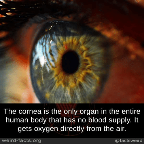 Facts, Memes, and Weird: The cornea is the only organ in the entire  human body that has no blood supply. It  gets oxygen directly from the air.  weird-facts.org  @facts weird