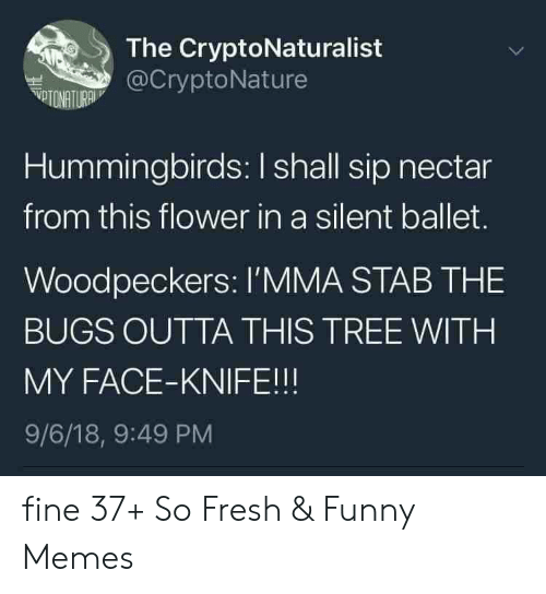 Fresh, Funny, and Memes: The CryptoNaturalist  @CryptoNature  VTONATURA  Hummingbirds: I shall sip nectar  from this flower in a silent ballet.  Woodpeckers: l'MMA STAB THE  BUGS OUTTA THIS TREE WITH  MY FACE-KNIFE!!!  9/6/18, 9:49 PM fine 37+ So Fresh & Funny Memes