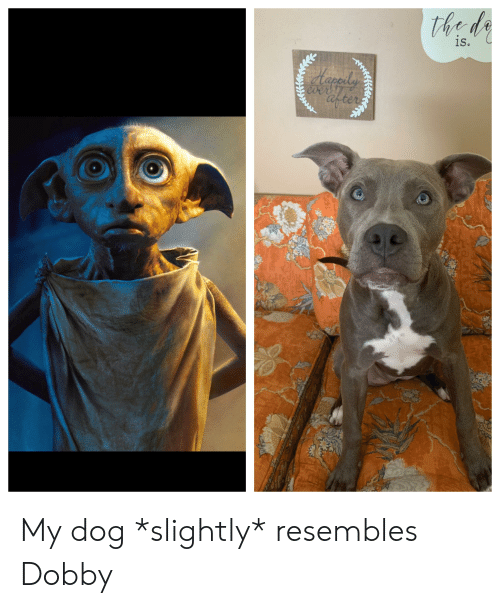 Ever After, Dog, and Dobby: the de  is.  Herady  ever  after My dog *slightly* resembles Dobby