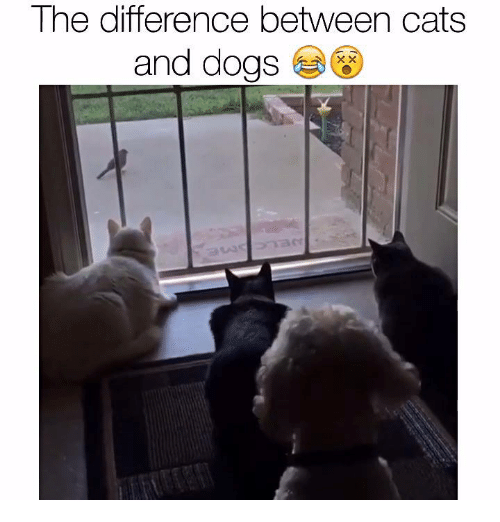 a comparison of the similarities and differences between dogs and cats For example, if you are comparing an electric bulb lamp with a gas lamp, compare them both according to their physical characteristics, their history of cats are lazy in contrast, dogs are livelier in contrast with cats, dogs are livelier contrasted with cats, dogs are livelier cats are lazy in comparison, dogs are livelier.