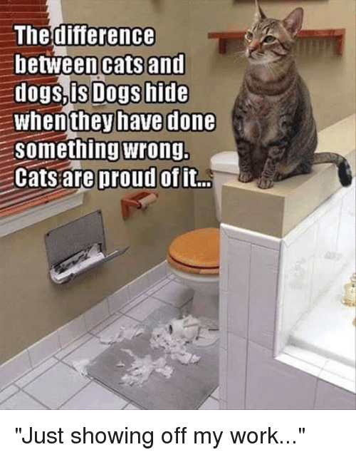 "Memes, 🤖, and Cats and Dogs: The difference  between cats and  dogs, is Dogs hide  When they have done  Something wrong.  Cats are proud of it... ""Just showing off my work..."""