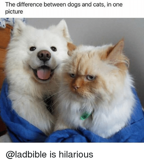 Cats Dogs And Funny The Difference Between Dogs And Cats In One