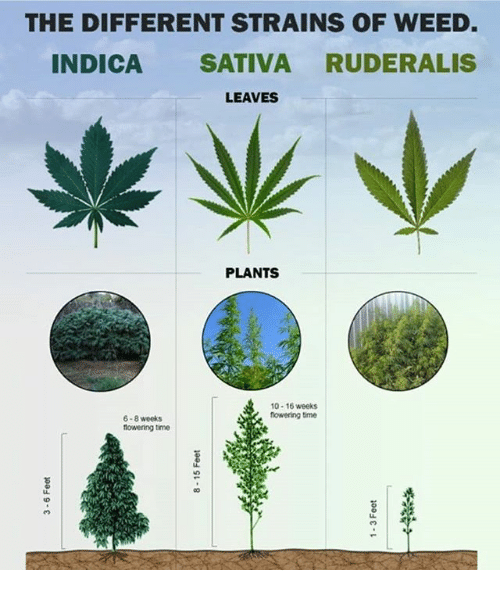 how to say smoke weed in different languages