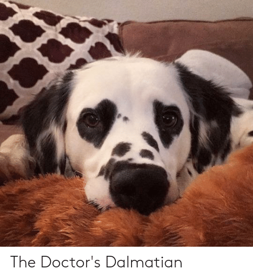 The Doctors, Dalmatian, and Doctors: The Doctor's Dalmatian