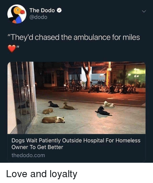 """Dogs, Homeless, and Love: The Dodo C  @dodo  """"They'd chased the ambulance for miles  Dogs Wait Patiently Outside Hospital For Homeless  Owner To Get Better  thedodo.com Love and loyalty"""