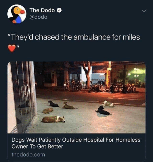 "Dogs, Homeless, and Hospital: The Dodo  @dodo  ""They'd chased the ambulance for miles  M14153  Dogs Wait Patiently Outside Hospital For Homeless  Owner To Get Better  thedodo.com"