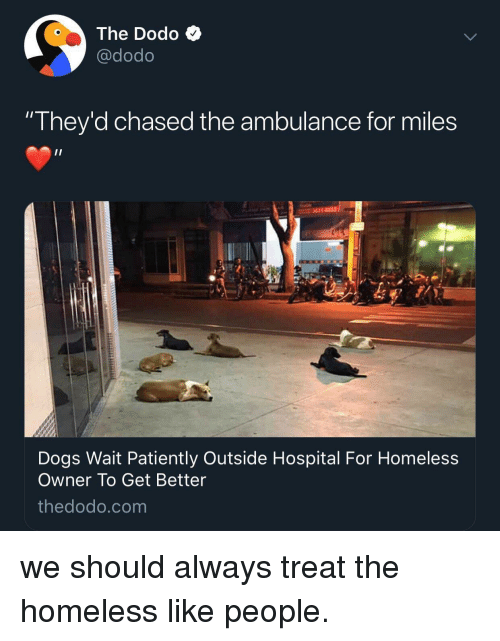 Dogs, Homeless, and Hospital: The Dodo Q  @dodo  They'd chased the ambulance for miles  Dogs Wait Patiently Outside Hospital For Homeless  Owner To Get Better  thedodo.com we should always treat the homeless like people.