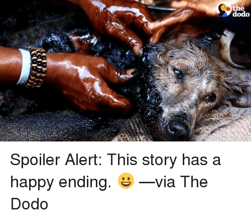 Memes, 🤖, and Happy Endings: the  dodo Spoiler Alert: This story has a happy ending. 😀 —via The Dodo