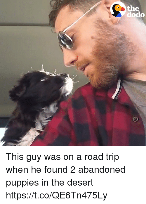 Puppies, Girl Memes, and Desert: the  dodo This guy was on a road trip when he found 2 abandoned puppies in the desert  https://t.co/QE6Tn475Ly