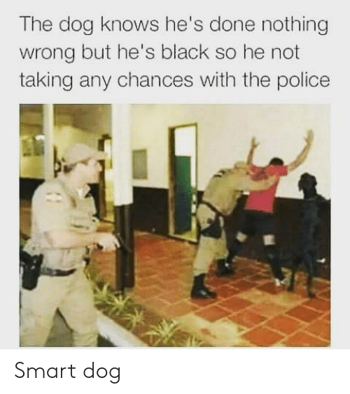 Police, Black, and Dog: The dog  wrong but he's black so he not  taking any chances with the police  knows he's done nothing Smart dog