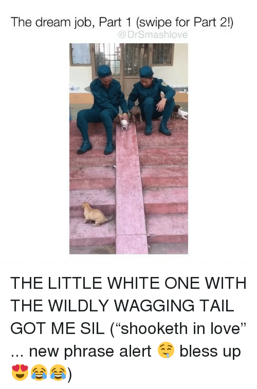 "Bless Up, Love, and Memes: The dream job, Part 1 (swipe for Part 2!)  @DrSmashlove  il THE LITTLE WHITE ONE WITH THE WILDLY WAGGING TAIL GOT ME SIL (""shooketh in love"" ... new phrase alert 🤤 bless up 😍😂😂)"