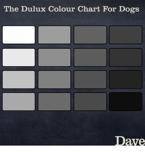 The Dulux Colour Chart For Dogs Dave Dogs Meme On Me