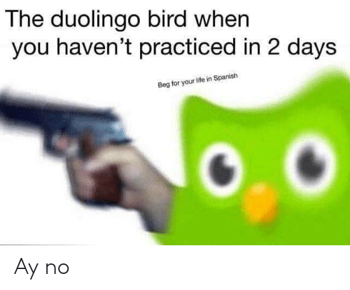 Life, Spanish, and You: The duolingo bird when  you haven't practiced in 2 days  Beg for your life in Spanish Ay no