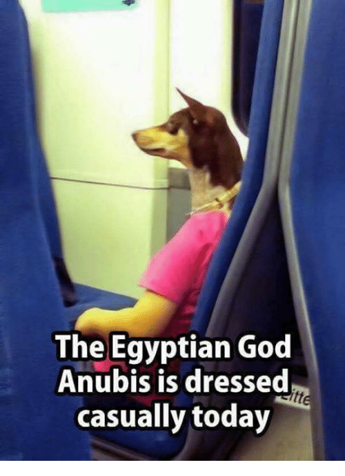 God, Memes, and Today: The Egyptian God  Anubis is dresse  casually today