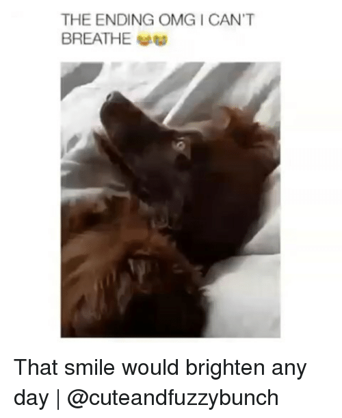 Memes, Omg, and Smile: THE ENDING OMG I CAN'T  BREATHE That smile would brighten any day | @cuteandfuzzybunch