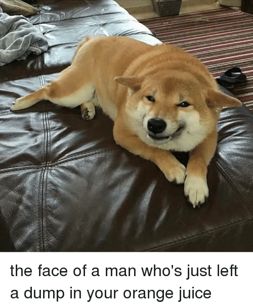 the face of a man whos just left a dump 5959486 ✅ 25 best memes about dank memes dank memes,Dank Memes Dog