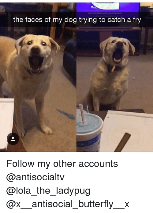 the faces of my dog trying to catch a fry 27507410 ✅ 25 best memes about catched catched memes
