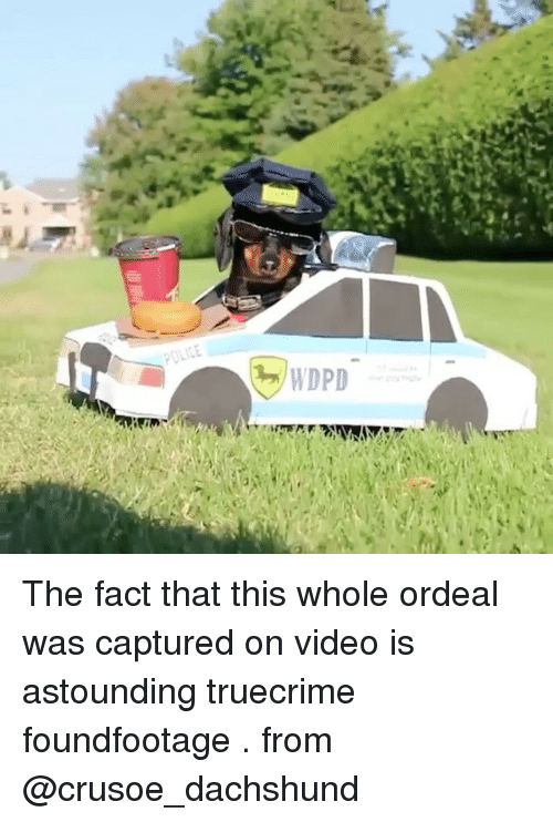Memes, Video, and 🤖: The fact that this whole ordeal was captured on video is astounding truecrime foundfootage . from @crusoe_dachshund