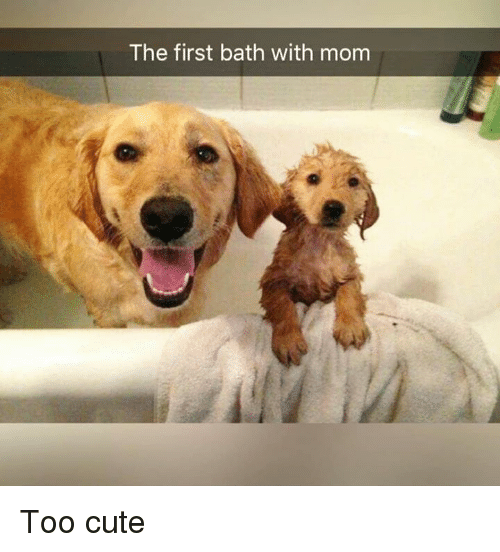 Cute, Dank, and Mom: The first bath with mom Too cute
