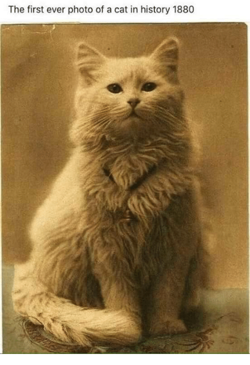 History, Cat, and Photo: The first ever photo of a cat in history 1880
