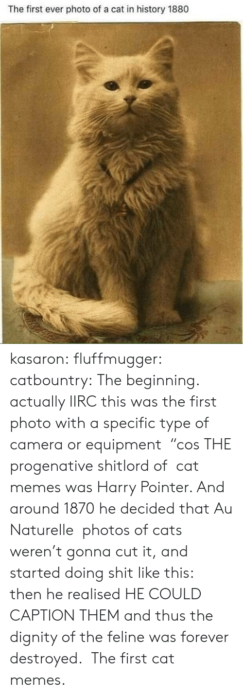 """Cats, Memes, and Tumblr: The first ever photo of a cat in history 1880 kasaron:  fluffmugger:  catbountry: The beginning. actually IIRC this was the first photo with a specific type of camera or equipment """"cos THE progenative shitlord of cat memes was Harry Pointer. And around 1870 he decided that Au Naturelle photos of cats weren't gonna cut it, and started doing shit like this: then he realised HE COULD CAPTION THEM and thus the dignity of the feline was forever destroyed.  The first cat memes."""