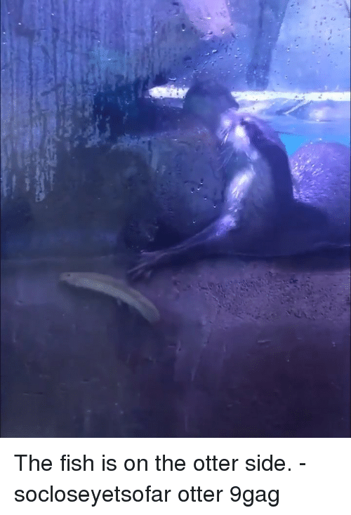 9gag, Memes, and Fish: The fish is on the otter side. - socloseyetsofar otter 9gag