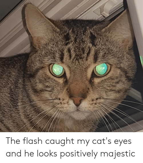 Cats, The Flash, and Flash: The flash caught my cat's eyes and he looks positively majestic