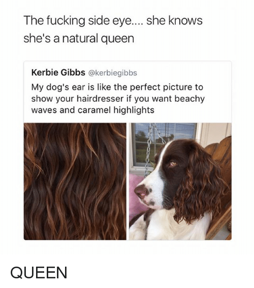 Dogs, Fucking, and She Knows: The fucking side eye....she knows  she's a natural queen  Kerbie Gibbs @kerbiegibbs  My dog's ear is like the perfect picture to  show your hairdresser if you want beachy  waves and caramel highlights QUEEN
