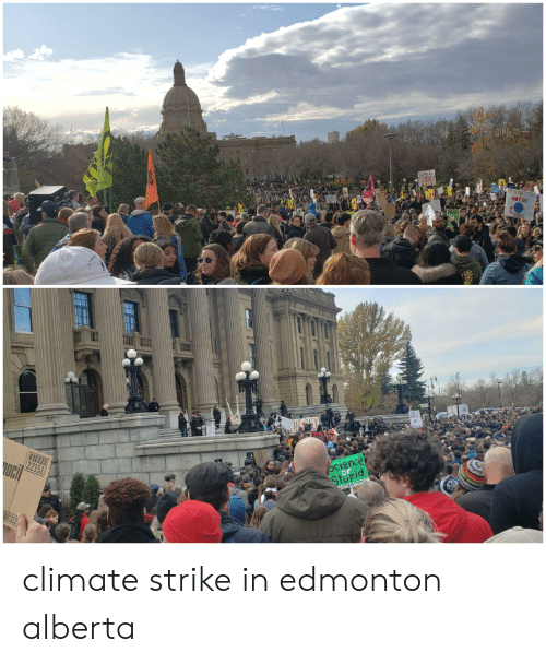 Science, Hot, and New: THE  Furues  TS GETTIN  HOT IN  HERE  NEW  Greens  Science  Stopid  FOLCE  37000  22151  OuChOora  ucil  80312 climate strike in edmonton alberta
