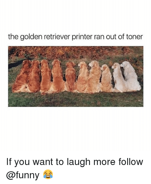 Funny, Golden Retriever, and Printer: the golden retriever printer ran out of toner If you want to laugh more follow @funny 😂