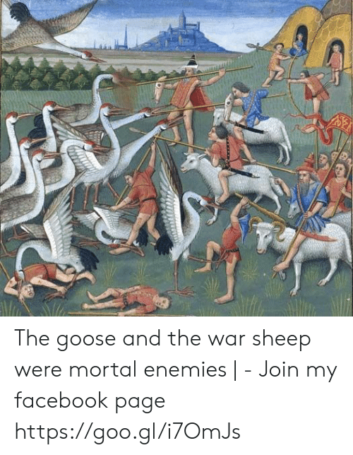 Facebook, Enemies, and Page: The goose and the war sheep were mortal enemies | - Join my facebook page https://goo.gl/i7OmJs