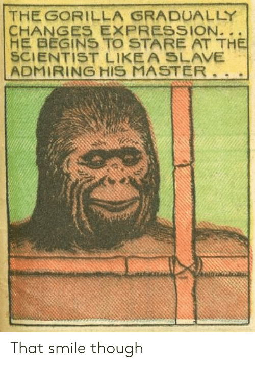 Smile, Gorilla, and Master: THE GORILLA GRADUALLY  HE BEGINS TO STARE AT TH  SCIENTIST LIKEA SLAVE  ADMIRING HIS MASTER That smile though