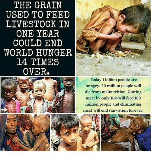 Memes, 🤖, and Hunger: THE GRAIN  USED TO FEED  LIVESTOCK IN  ONE YEAR  COULD END  WORLD HUNGER  14 TIMES  OVER  Today 1 billion people are  hungry. 20 million people will  die from malnutrition. Cutting  meat by only 10% will feed 100  million people and eliminating  meat will end starvation forever.