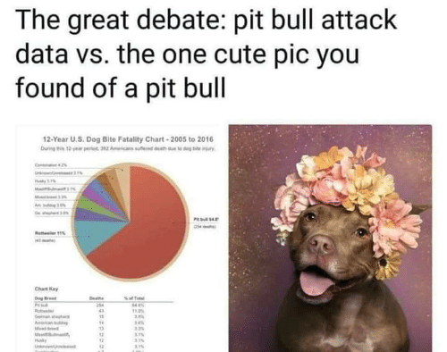 The Great Debate Pit Bull Attack Data vs the One Cute Pic You Found