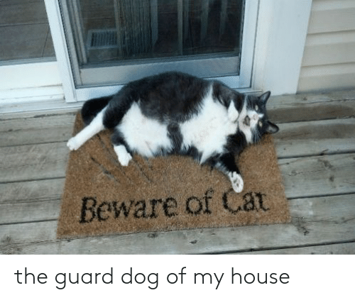 My House, House, and Dog: the guard dog of my house