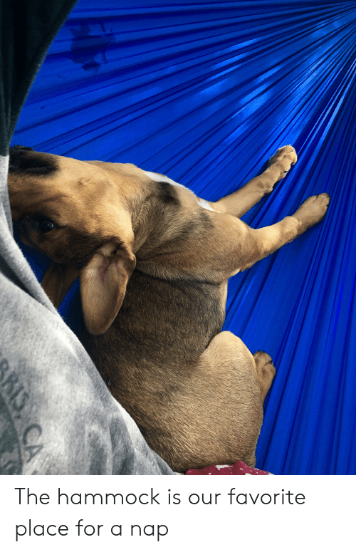 Hammock, Nap, and For: The hammock is our favorite place for a nap