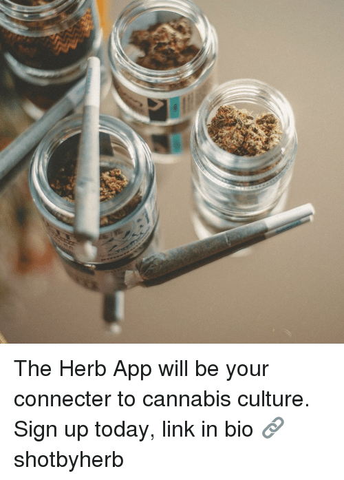 Memes, Link, and Today: The Herb App will be your connecter to cannabis culture. Sign up today, link in bio 🔗 shotbyherb