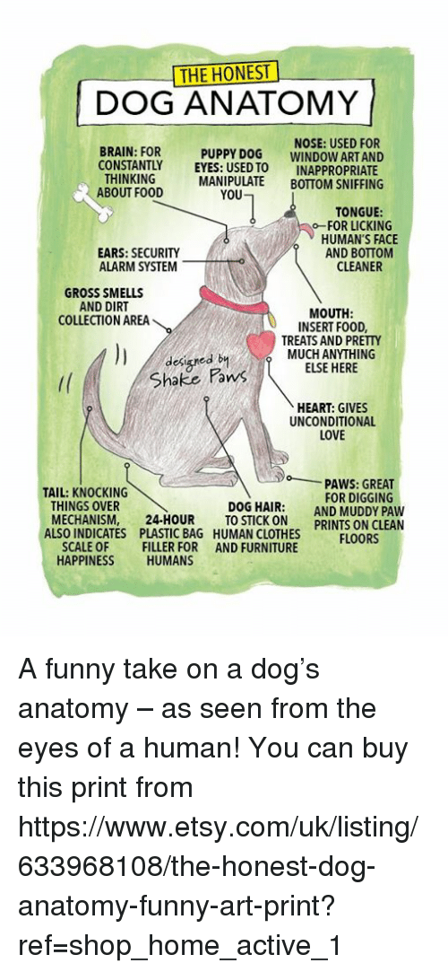 The Honest Dog Anatomy Brain For Constantly Thinking About Food