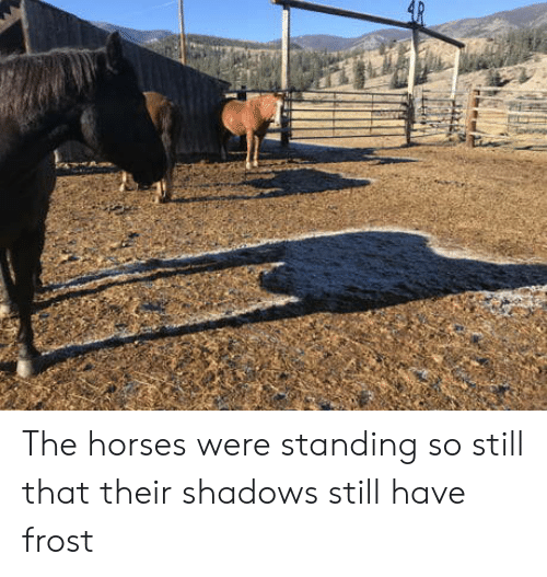 The Horses Were Standing So Still That Their Shadows Still Have