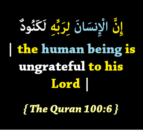 Anaconda, Quran, and Human: | the human being is  ungrateful to his  Lord  [The Quran 100:6,}