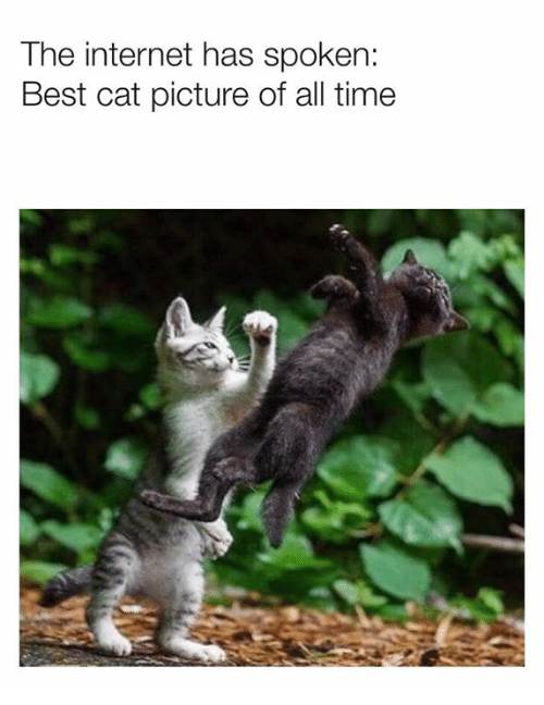 Dank, Internet, and Best: The internet has spoken:  Best cat picture of all time