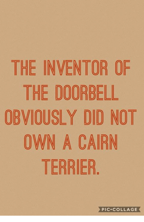 Memes, Collage, and 🤖: THE INVENTOR OF  THE DOORBELL  OBVIOUSLY DID NOT  OWN A CAIRN  TERRIER  PIC.cOLLAGE