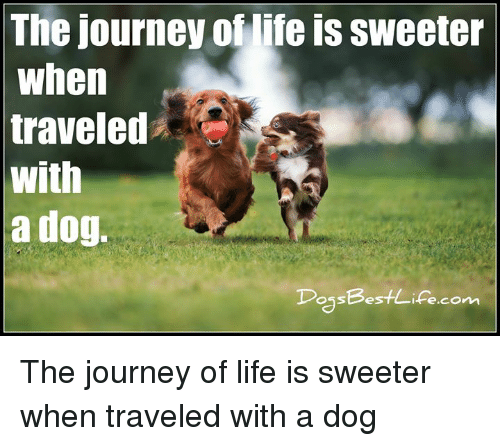 Journey, Life, and Memes: The journey of life is sweeter  when  traveled  with  a dog.  DossBestlife.comm The journey of life is sweeter when traveled with a dog